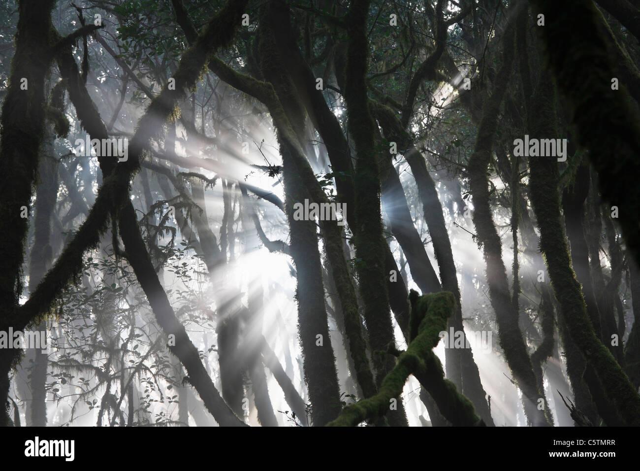 Spanien, Kanarische Inseln, La Gomera, Ansicht der Lorbeerwald im Nationalpark garajonay Stockbild