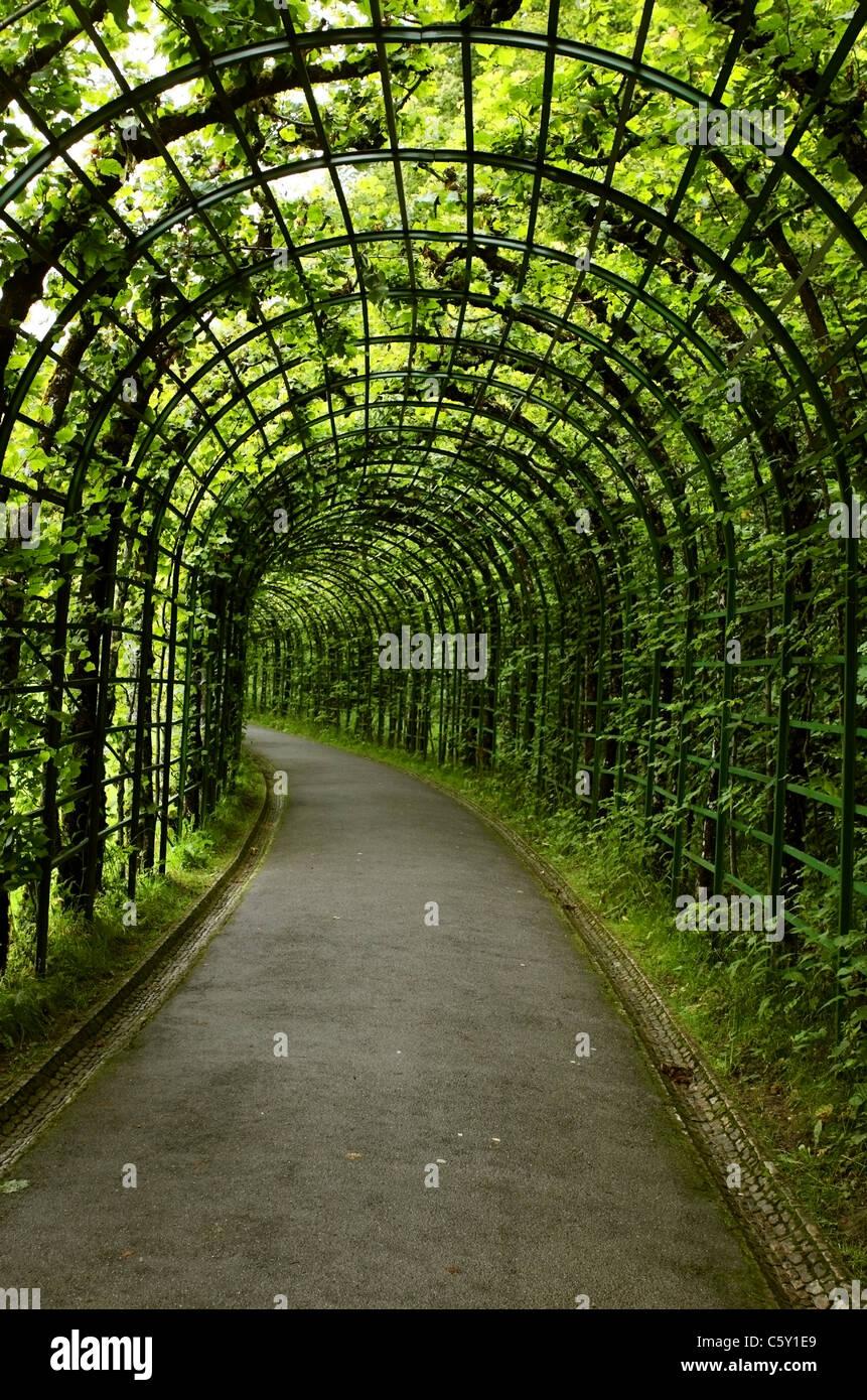 Leben Sie grünen Tunnel, die mit Pflanzen Stockbild
