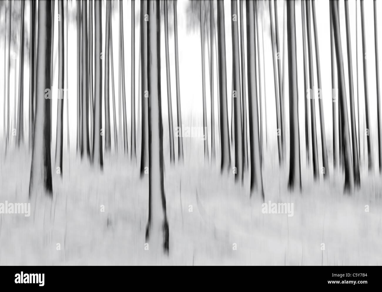 verschwommene Bäume und Schnee. Stockbild