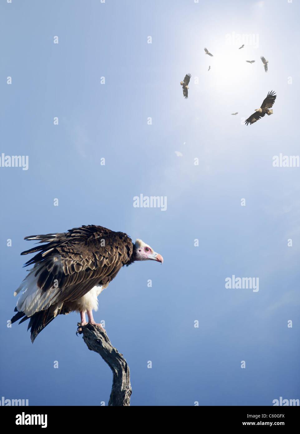 Conceptual - Geier warten darauf, Jagd auf unschuldige Opfer (digital Composite) Stockbild