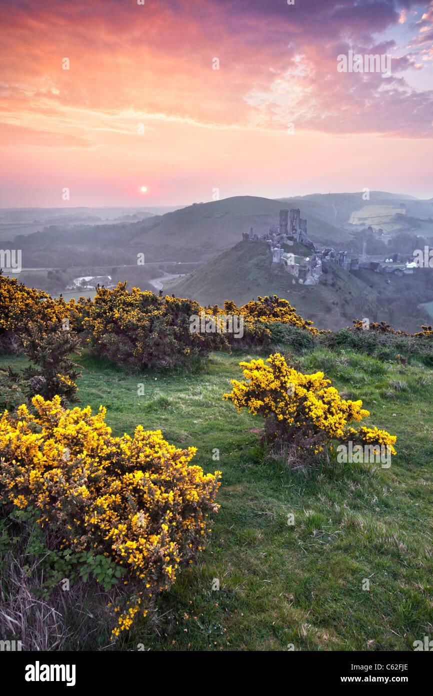 Sonnenaufgang am Corfe Castle in Dorset, England. Stockbild