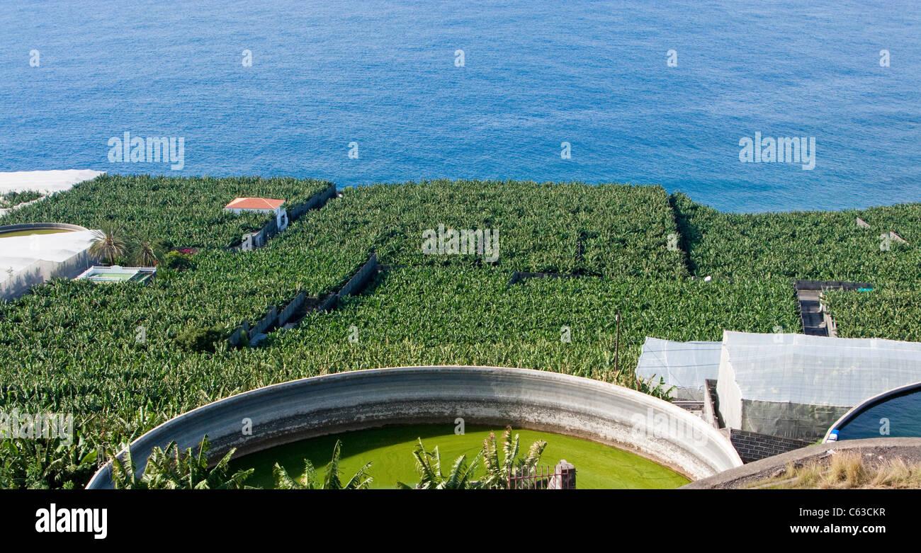 Bananenplantagen und Wassertanks nahe Puerto Naos, La Palma, Kanarische Inseln, Spanien, Europa Stockbild
