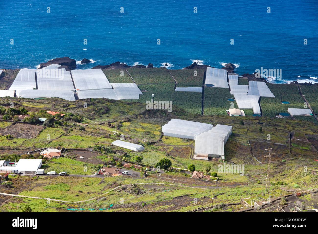 Bananenplantagen an der Südküste nahe, Los Canarios Fuencaliente, La Palma, Kanarische Inseln, Spanien, Stockbild