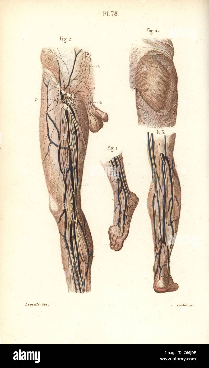 Nett Männlich Lymphsystem Fotos - Menschliche Anatomie Bilder ...