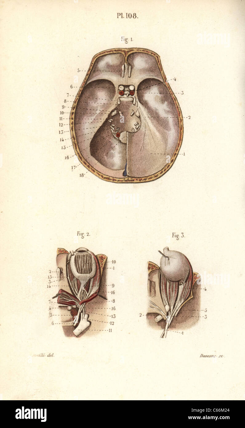 Nett Nerven Im Auge Bilder - Menschliche Anatomie Bilder ...