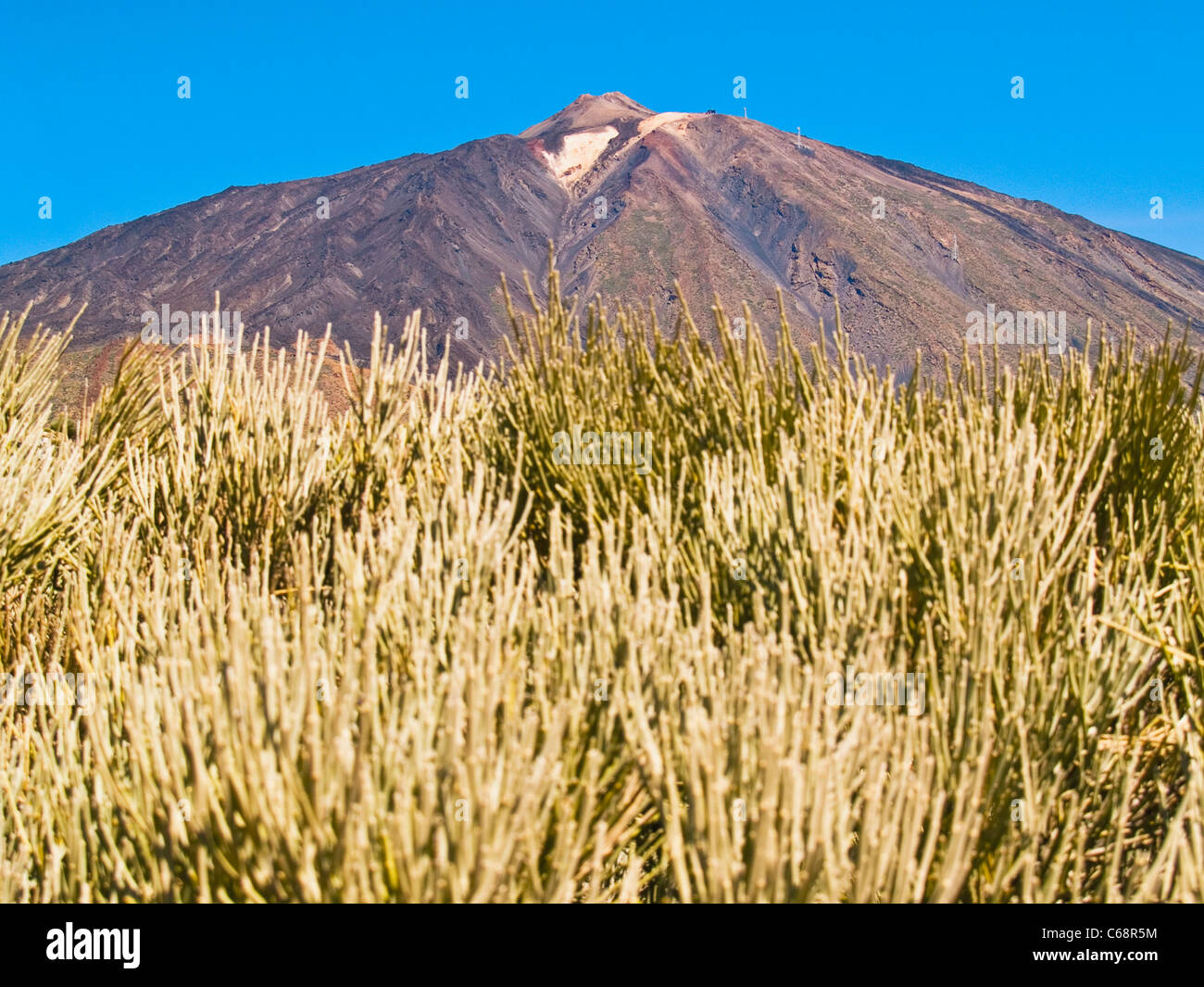 Der Teide Nationalpark Teneriffa, Kanarische Inseln-Spanien-Europa Stockbild