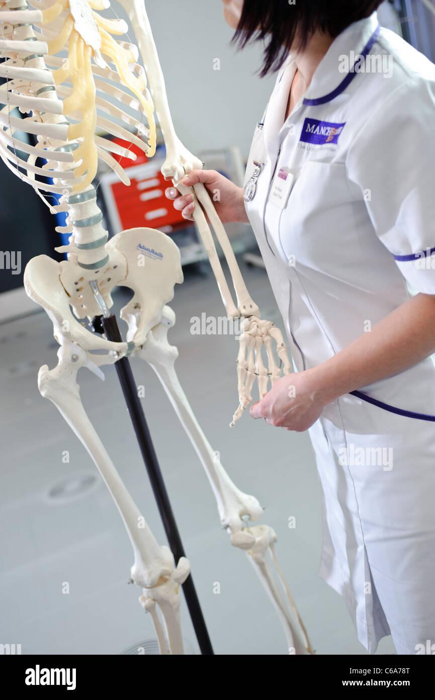 Student Krankenschwester an Hand der Dummy-menschliches Skelett Modell Stockbild