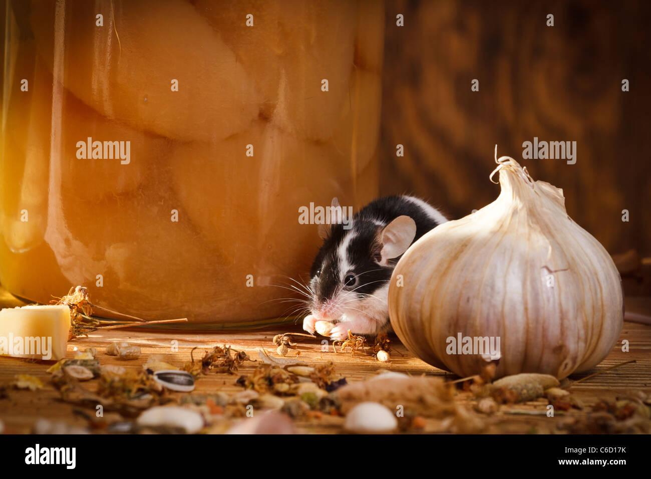 Kleine Maus Die Etwas Im Keller Zu Essen Stockfoto Bild