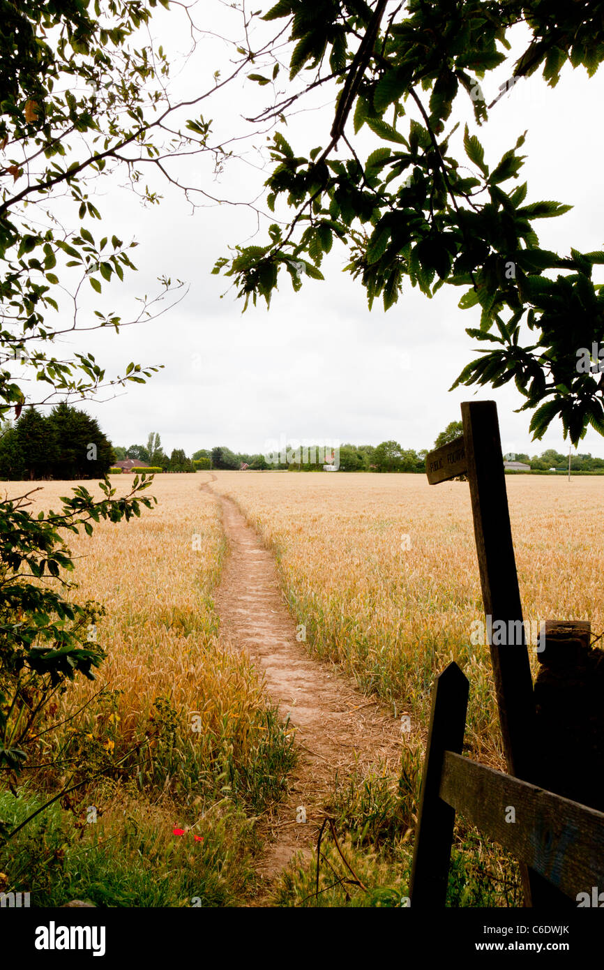 Wanderweg durch Weizenfeld in Norfolk, England mit Finger Beitrag zeigt Richtung Fußweg Stockbild
