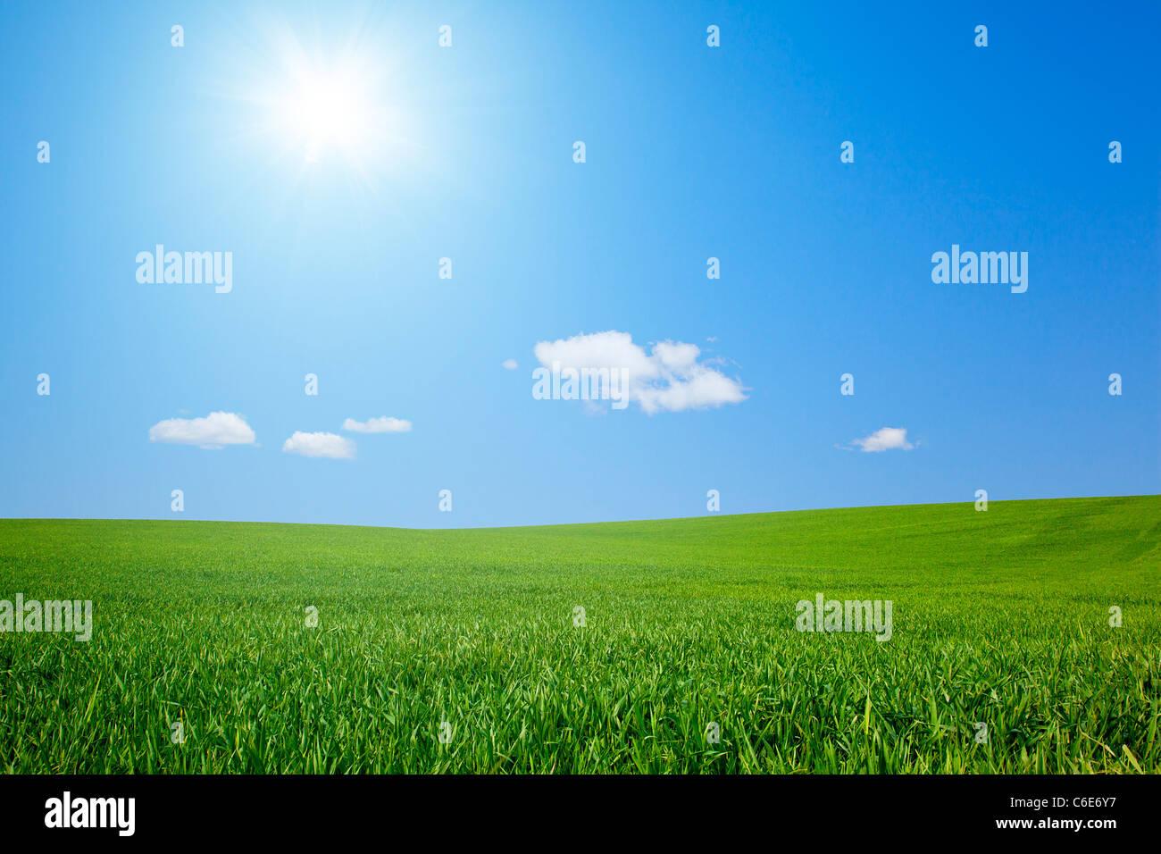 Feld mit Sonne Stockbild
