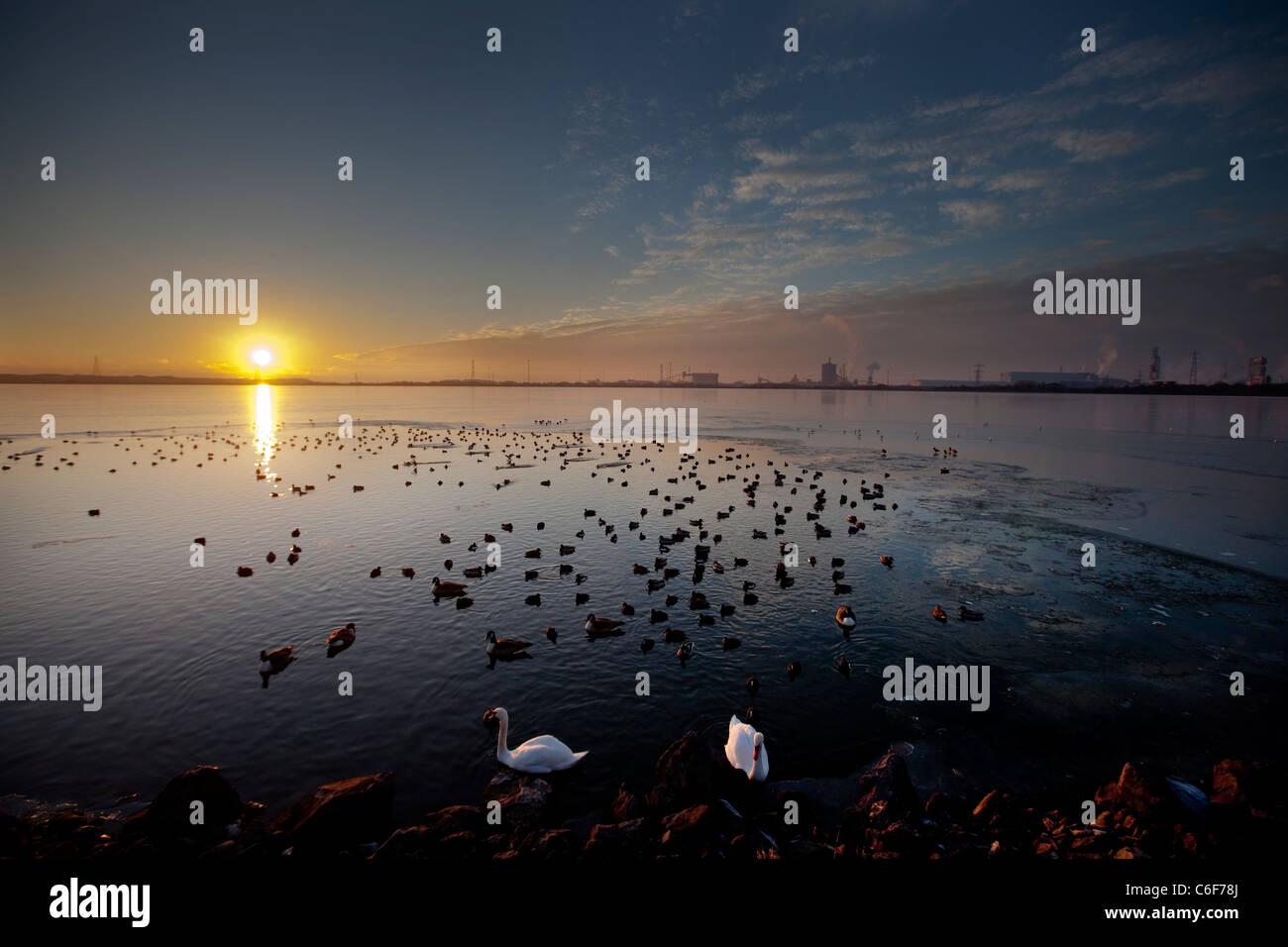 Verschiedene Arten von Enten zusammen mit ein paar Schwäne suchen eine Pause im Eis am Eglwys Nunydd Stausee in Port Talbot. Stockfoto