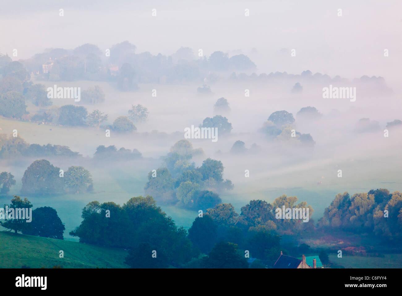Baumkronen steigen aus dem Nebel in einem grünen, neblige Tal Stockbild