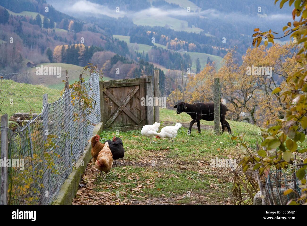 Hinterhof Eines Bauernhauses In Der Schweiz Stockbild