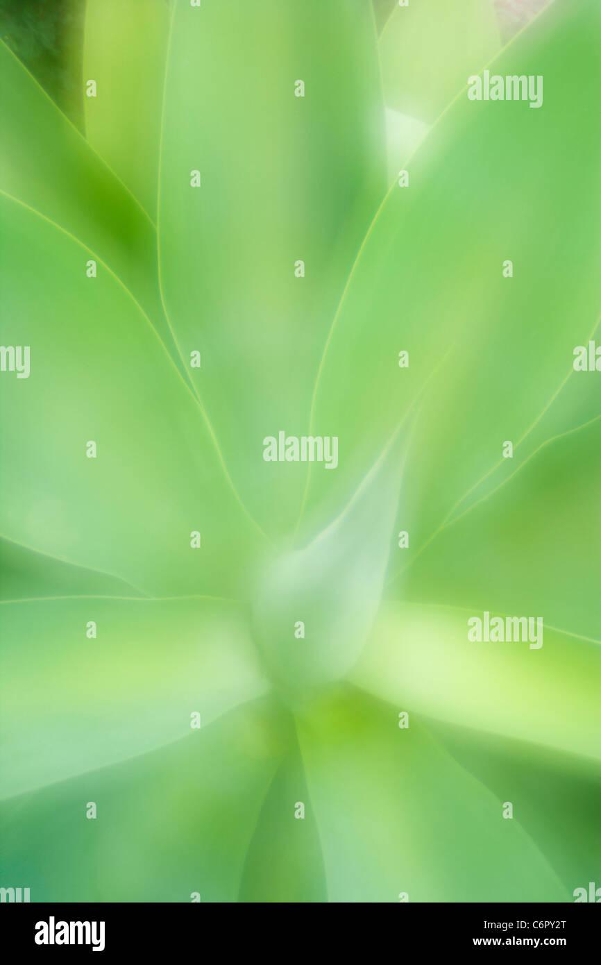 Agave Blattmuster, Lensbaby Zone Platte Optic Stockbild