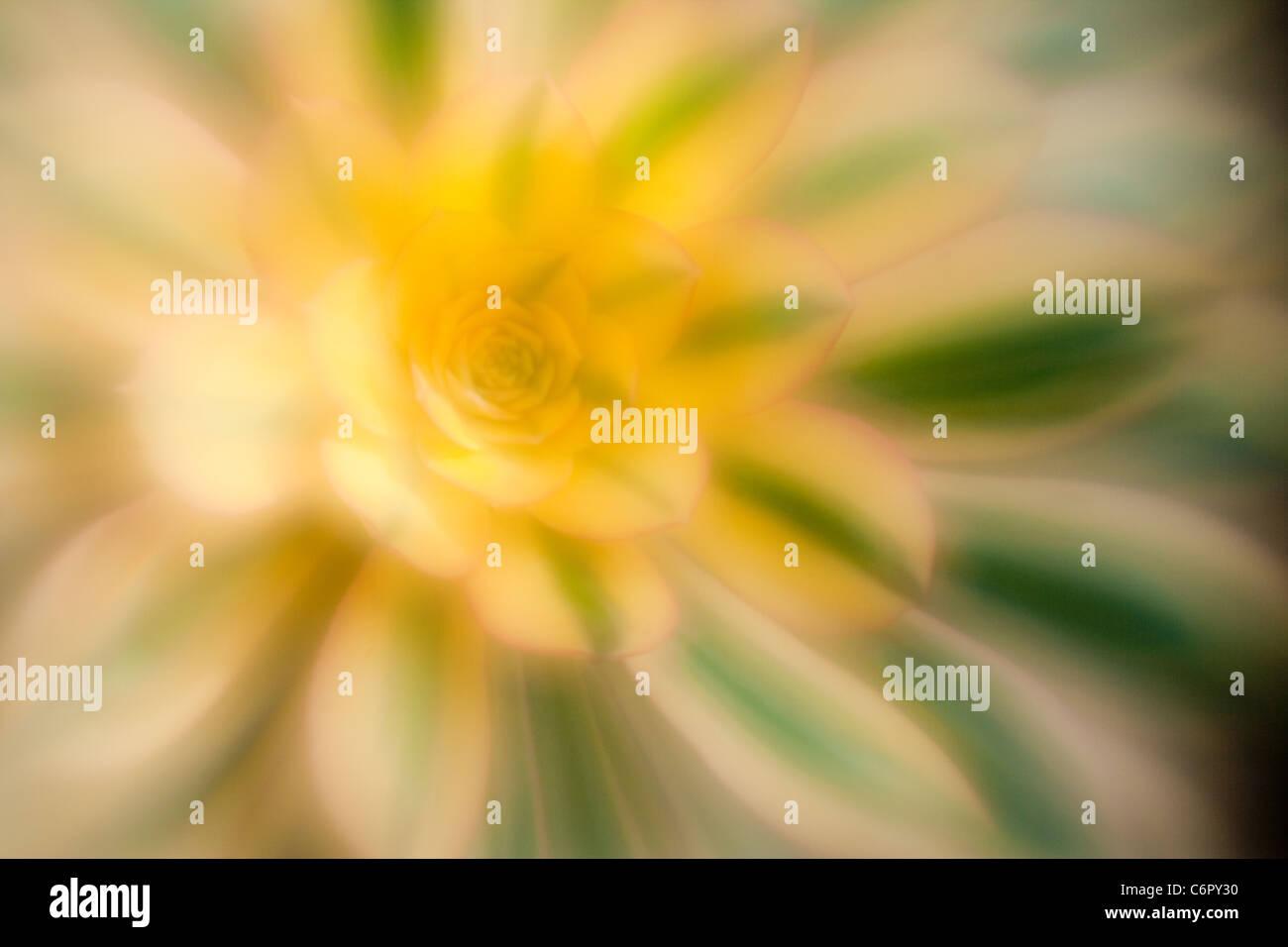 saftig, Lensbaby Soft Focus Optic Stockbild