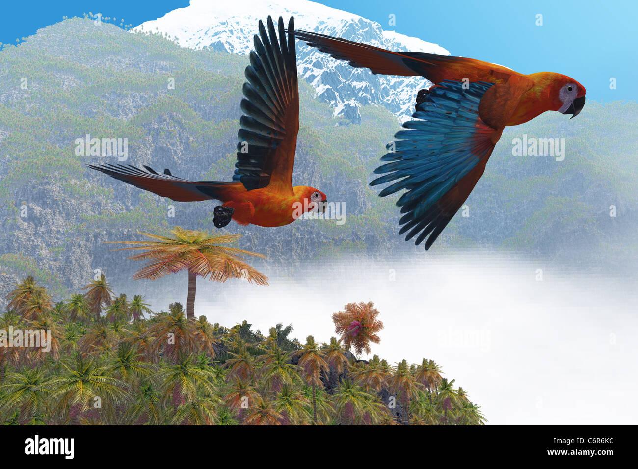 Zwei schöne Papageien fliegen gemeinsam in ihre Dschungel-Paradies. Stockfoto