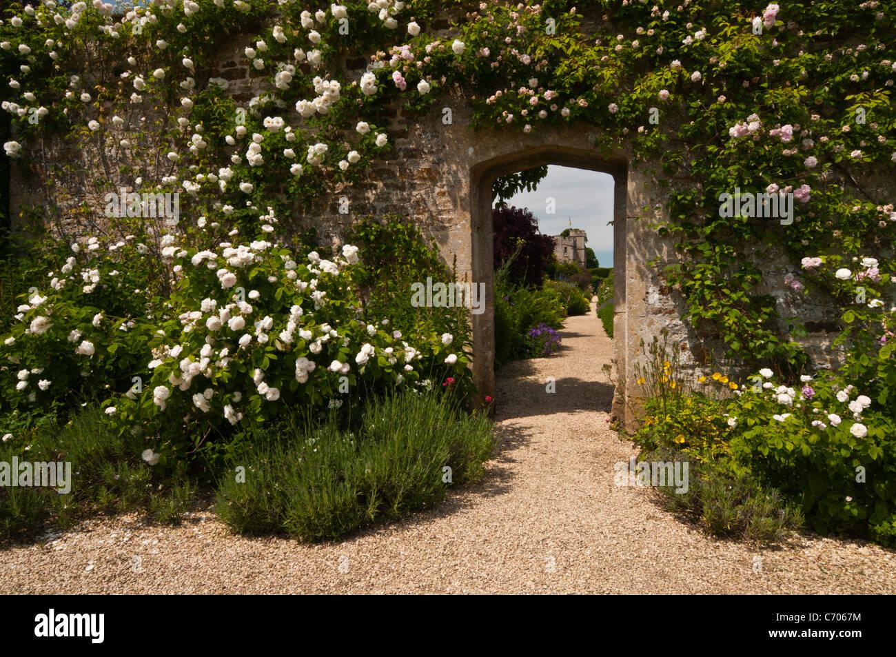 Rosen Klettern eine Steinmauer und Gestaltung den Blick auf den ...