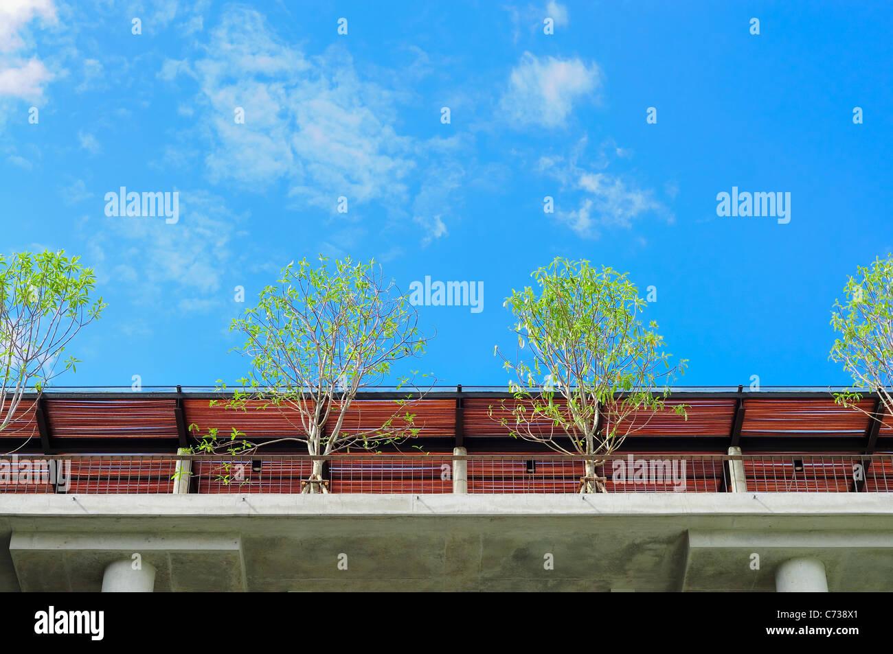 Bäume auf Dachterrasse Stockbild