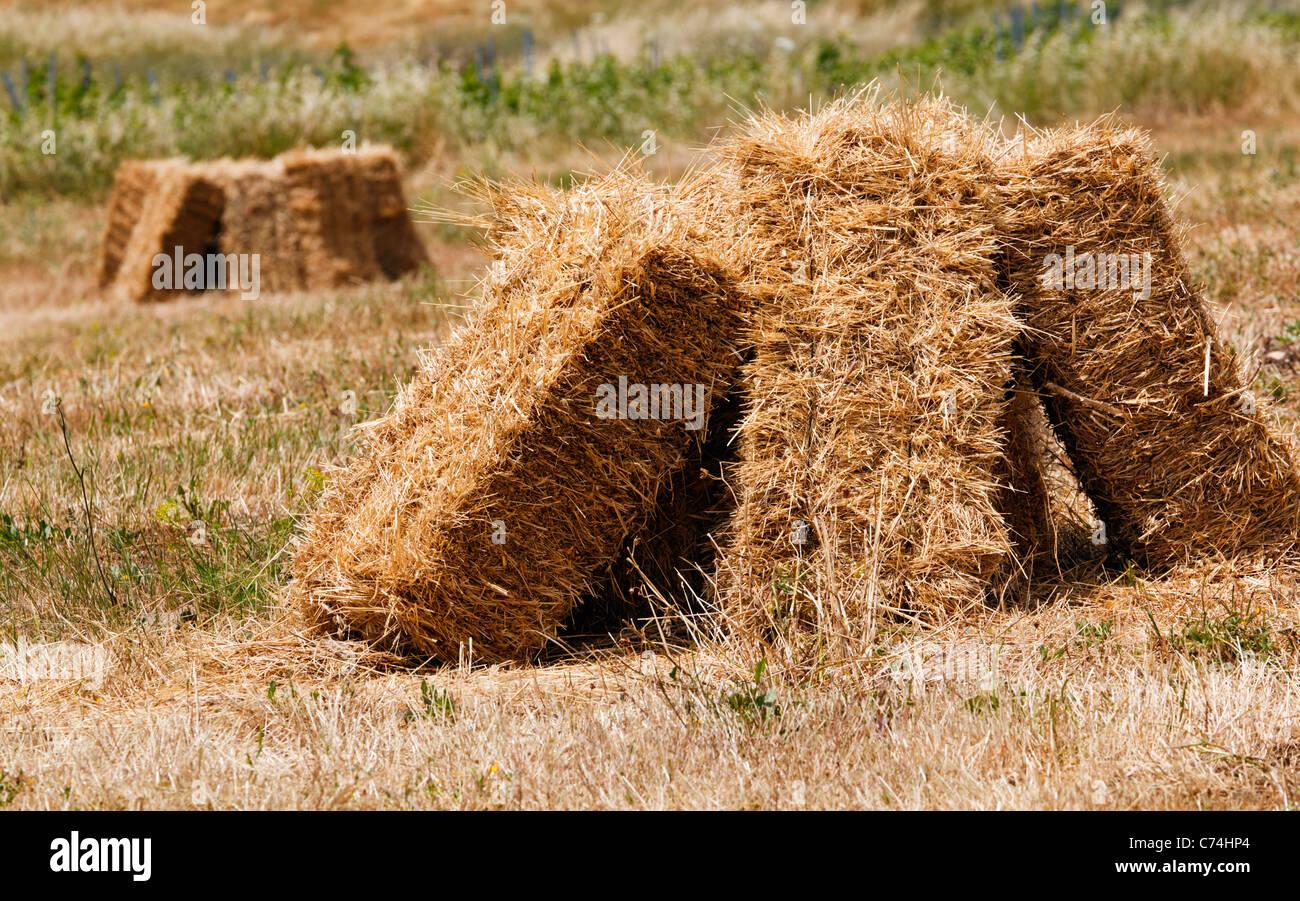 Vor kurzem Ballen Heu in Feldern in der Nähe von Ronda, Provinz Malaga, Spanien. Stockbild