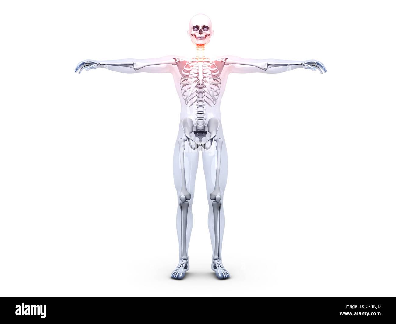 Atemberaubend Hals Anatomie Vorderansicht Ideen - Anatomie Ideen ...