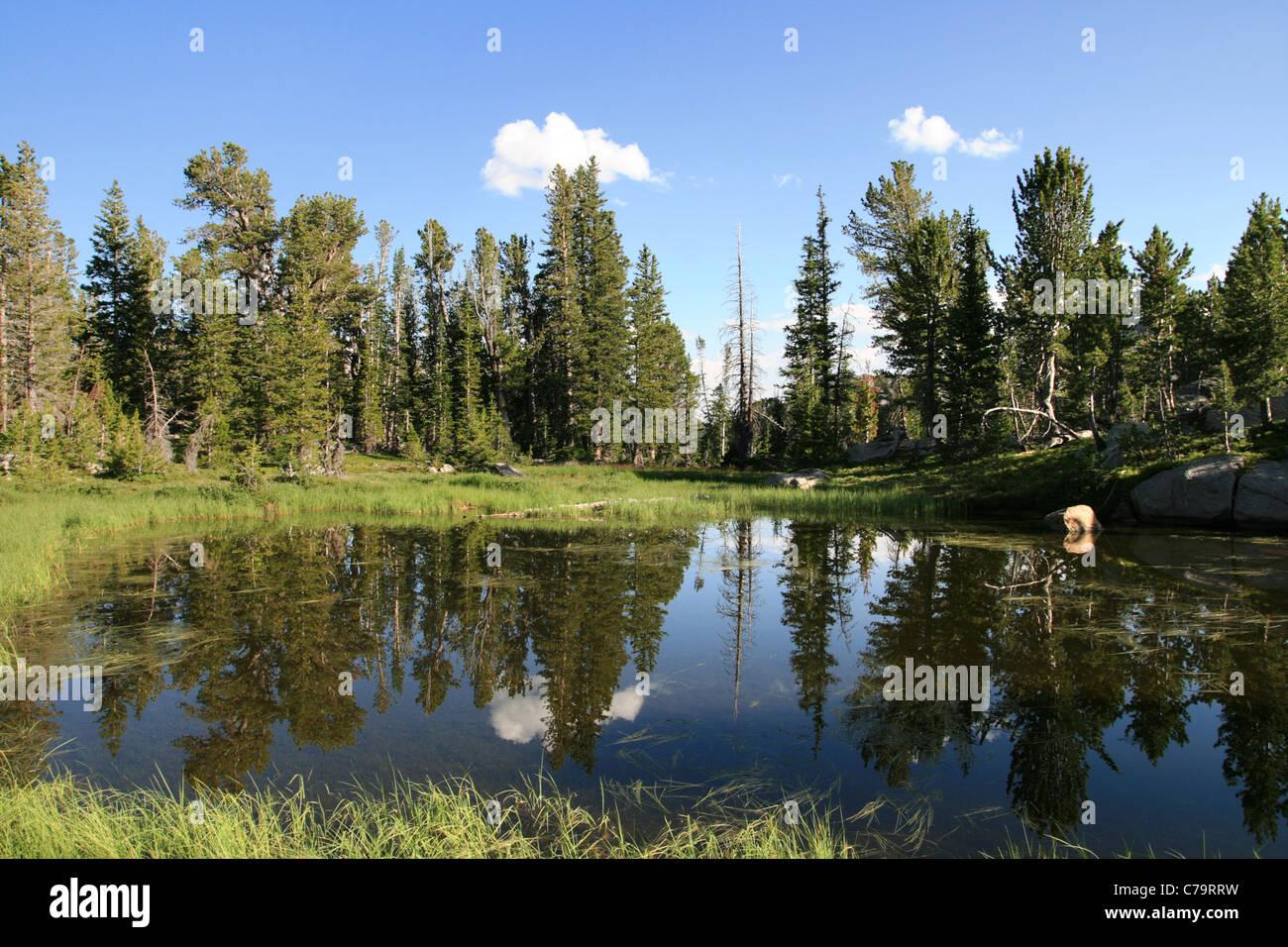 Wildnis-See mit Reflexion der Kiefern Stockbild