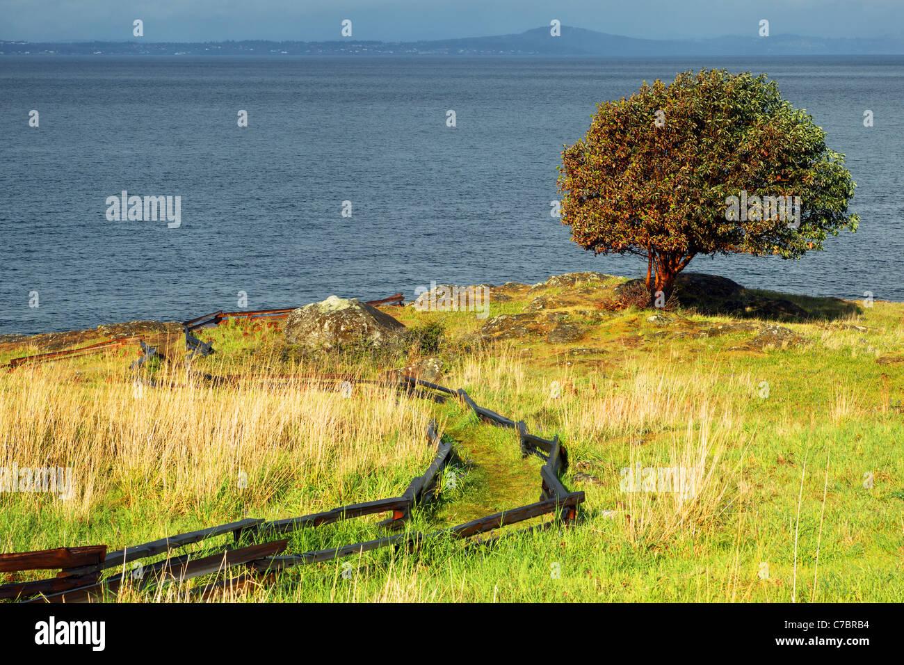 Pazifische Madrone Baum und Trail durch Prärie, Westside bewahren, San Juan Island, Washington, USA Stockbild