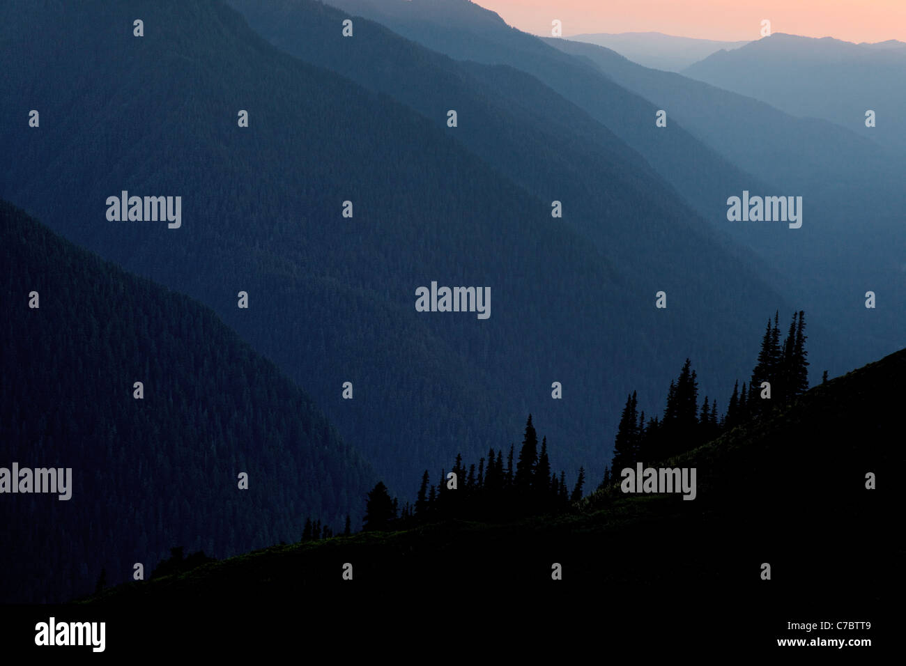 Stimmungsvolle Beleuchtung im Hoh River Valley, Olympic Nationalpark, Washington Stockbild