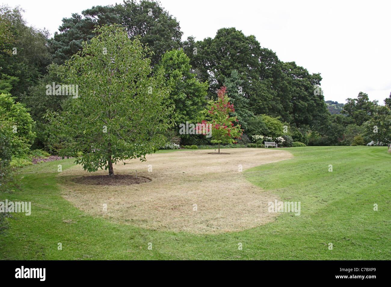 Späten Rasen schneiden zeigt Blumenzwiebeln im Rasen Royal Horticultural Society Garten Rosemoor, Great Torrington, Devon, England, UK Stockfoto