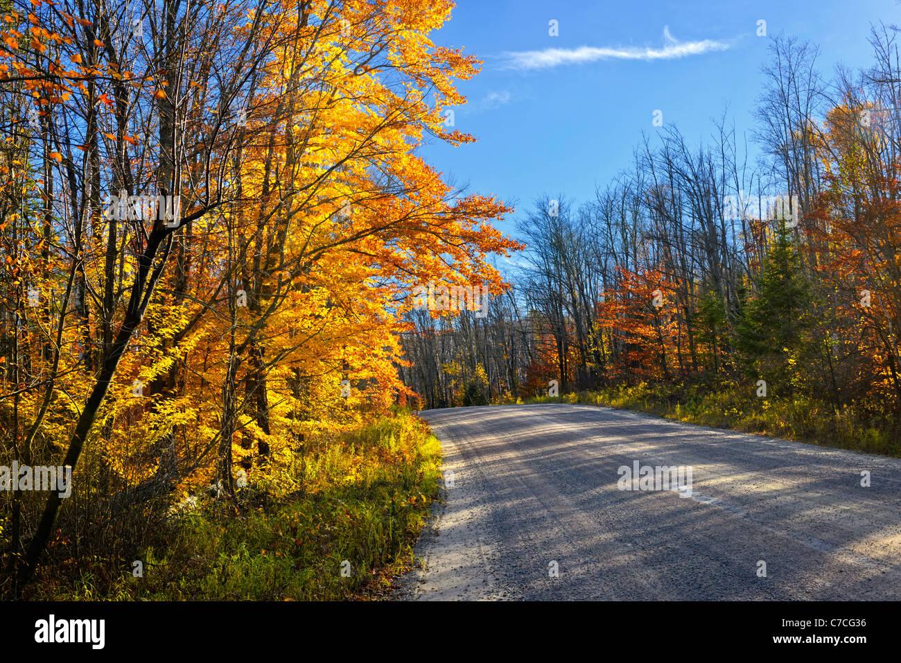 Schotterstrasse Durch Farbenfrohe Herbst Wald In Ontario Kanada