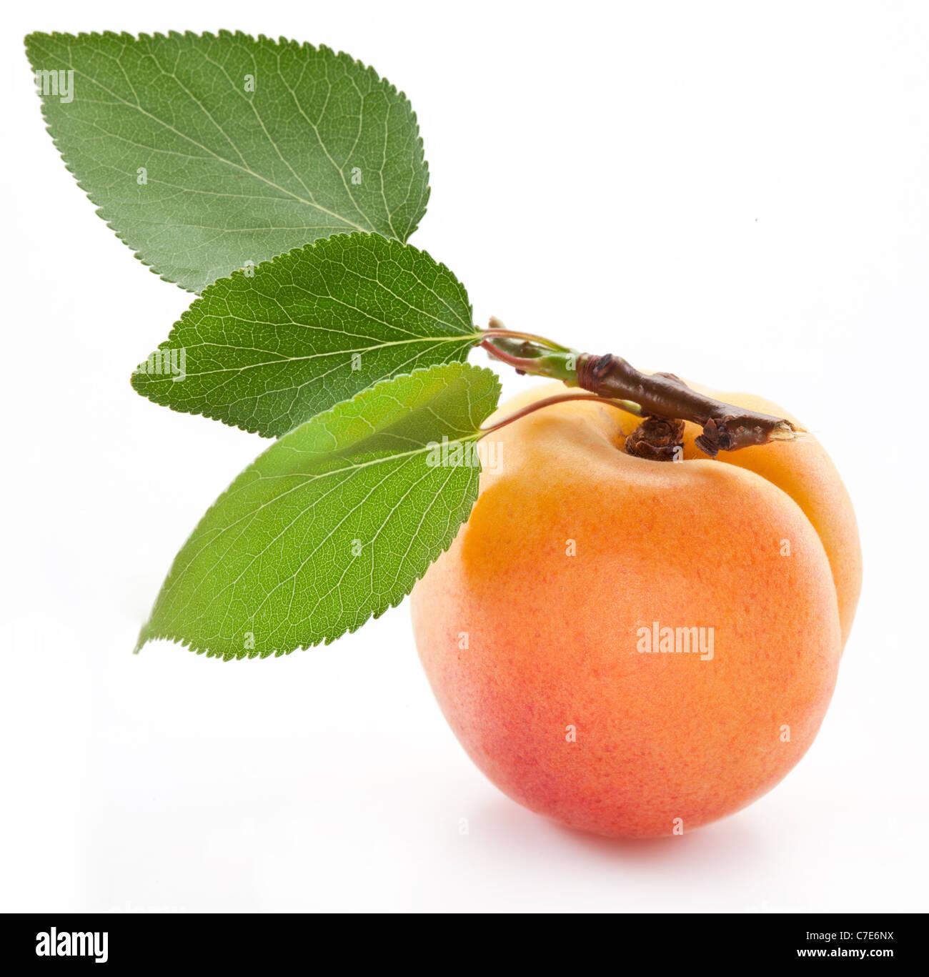 Aprikose mit Blatt auf einem weißen Hintergrund. Stockbild