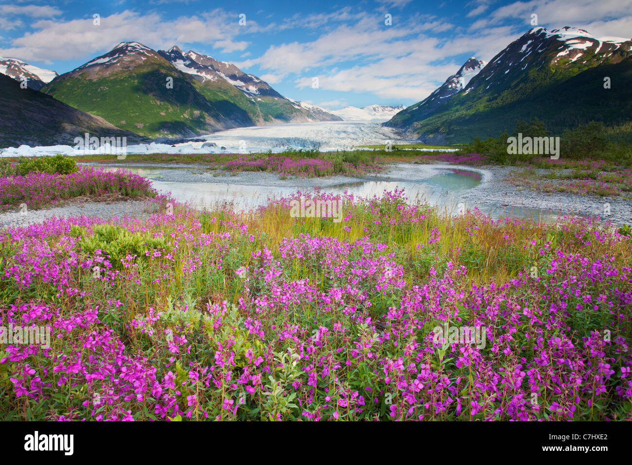 Wildblumen am Spencer Gletscher, Chugach National Forest, Alaska. Stockbild