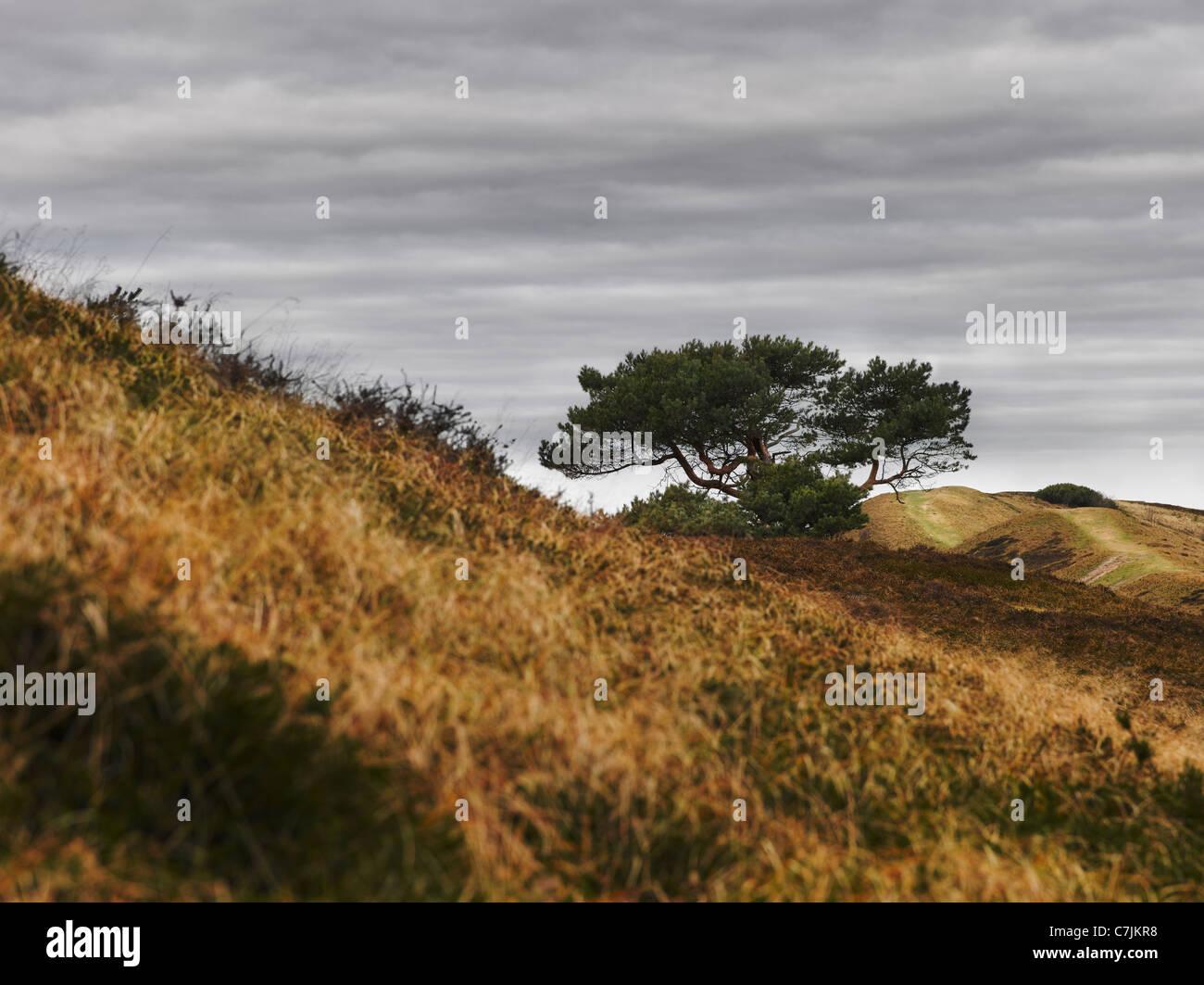 Baum am Hang in trockenen Landschaft im ländlichen Raum Stockbild