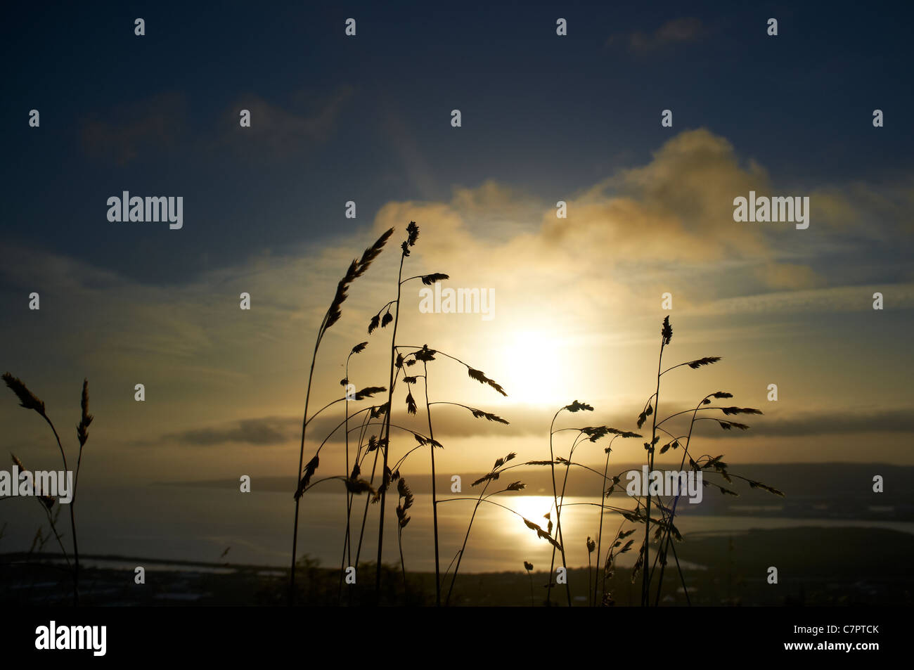 Ansicht von Belfast Lough und County Down von Cave Hill bei Sonnenaufgang mit Wildgras im Vordergrund Stockbild