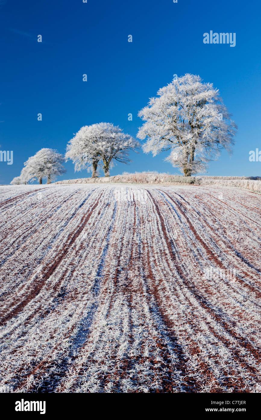 Hoar Milchglas Ackerland und Baumbestand, Bogen, Mid Devon, England. Winter (Dezember) 2010. Stockbild
