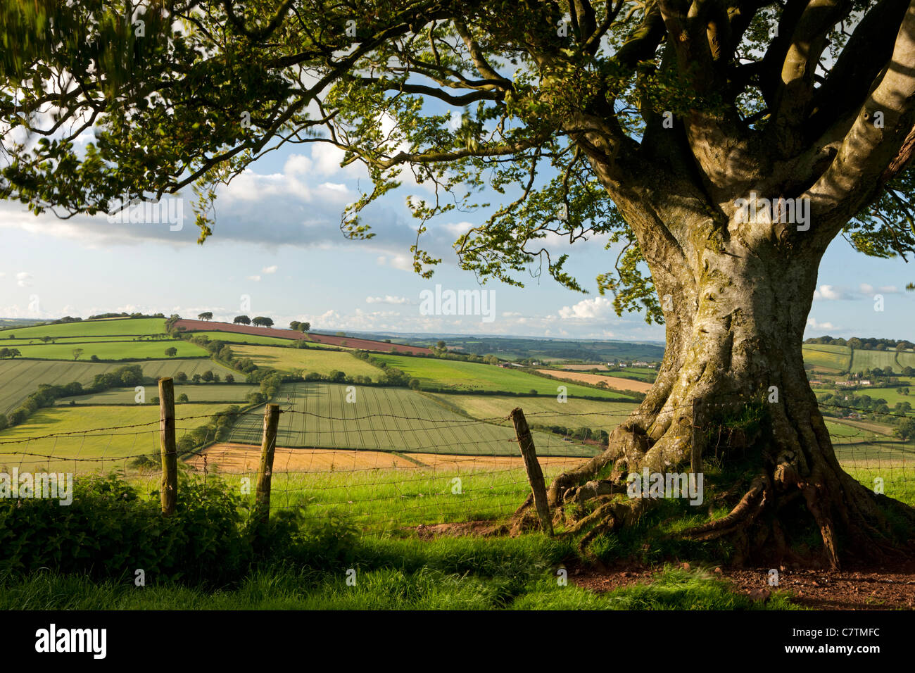 Sommer-Felder in der Devon Landschaft, Raddon Hills, Devon, England. Sommer (Juni) 2011. Stockbild
