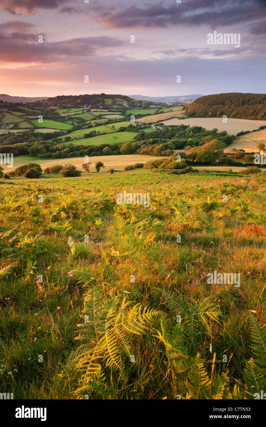 Dorset Hügellandschaft betrachtet von Golden Cap, Dorset, England. Sommer (Juli) 2011. Stockbild