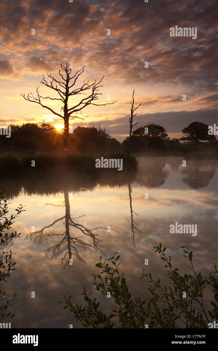 Herrlichen Sonnenaufgang hinter tote Bäume und See Reflexionen, Morchard Road, Devon, England. Sommer (Juli) Stockbild