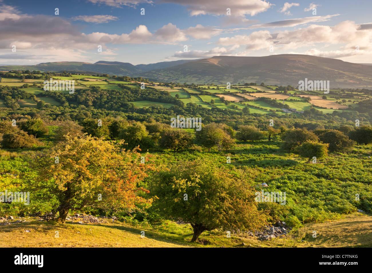 Moor, wogenden Feldern und schwarze Berge des Brecon Beacons, Powys, Wales. Sommer (August) 2011. Stockbild
