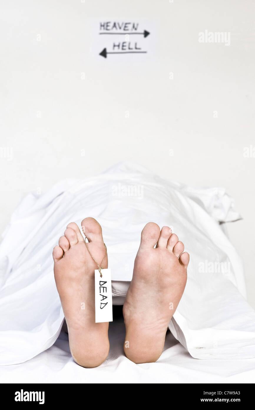 Cadaver Stockfotos & Cadaver Bilder - Alamy