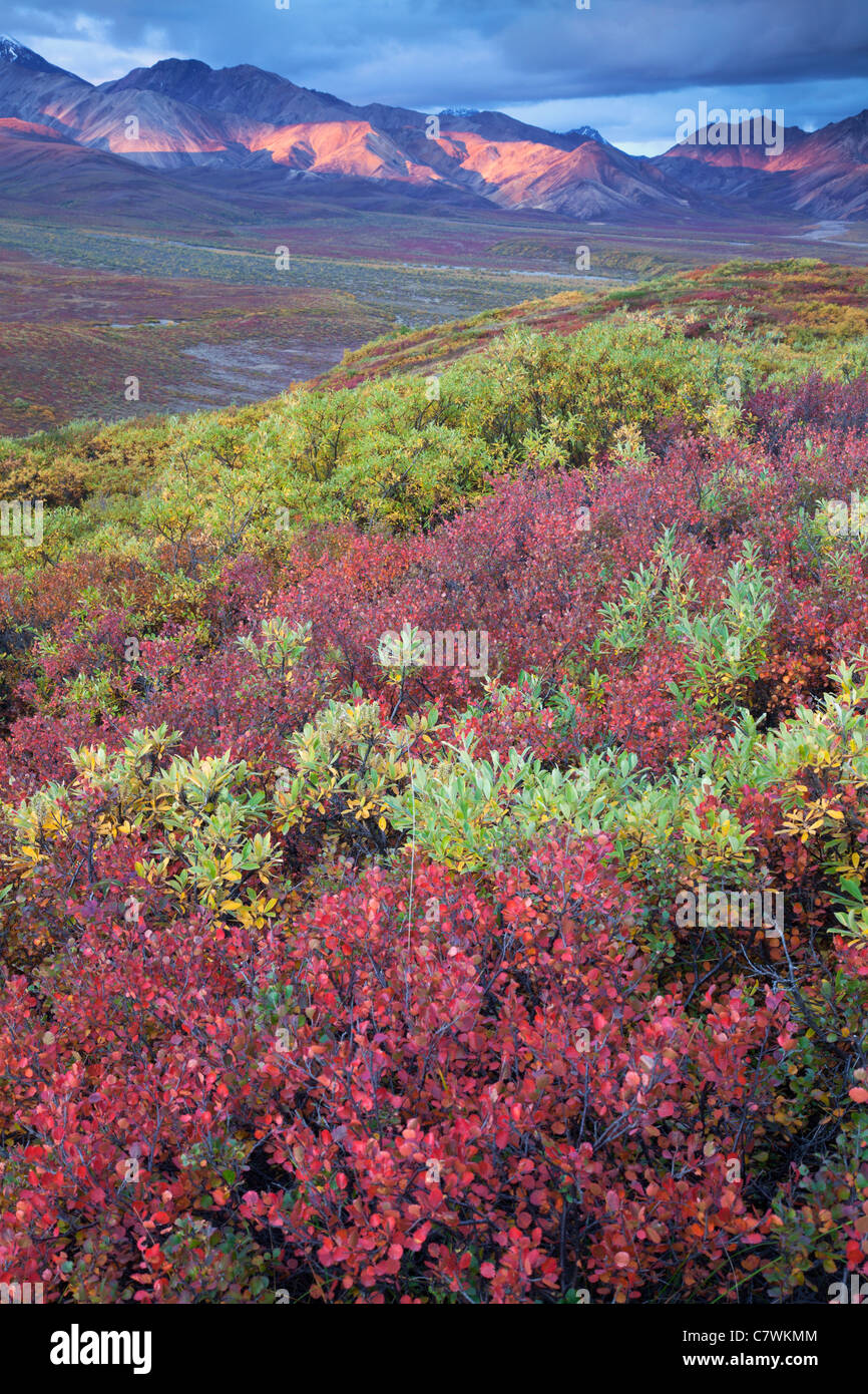 Farben des Herbstes in Polychrome Pass, Denali-Nationalpark, Alaska. Stockbild
