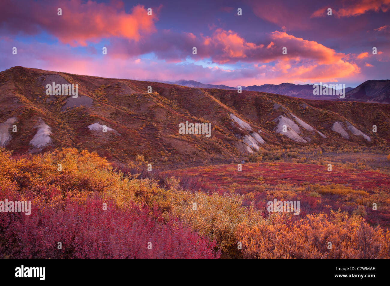 Sonnenuntergang in Sable Pass, Denali-Nationalpark, Alaska. Stockbild
