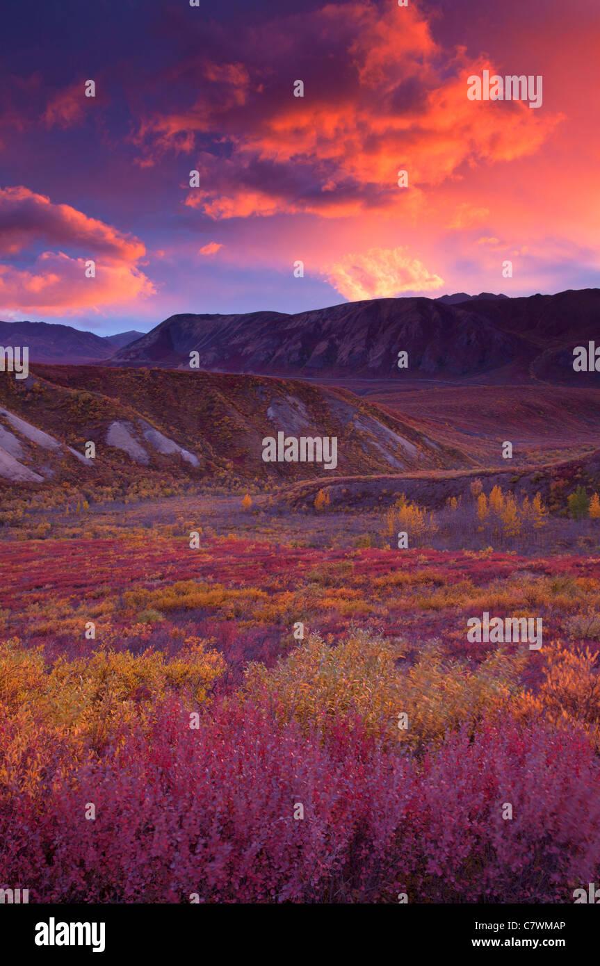 Sonnenuntergang in Sable Pass, Denali-Nationalpark, Alaska. Stockbild
