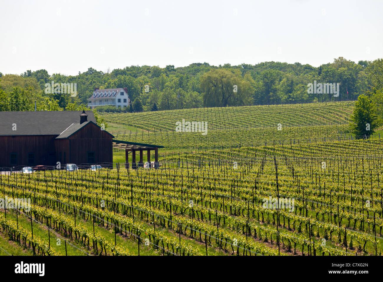 Kanada, Ontario, Weinberge in der Niagara-Region Stockbild