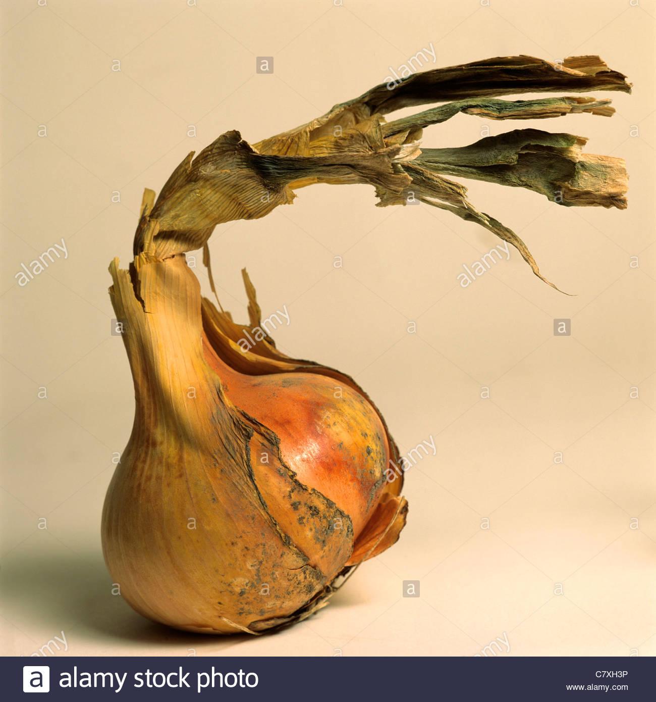 Zwiebel mit peeling Haut Stockfoto