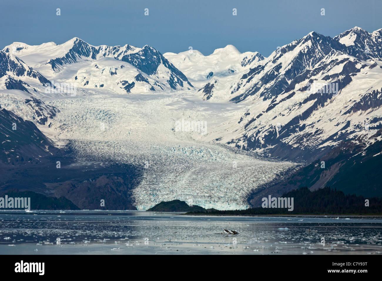 Fernblick über Yale College Fjord, Alaska-Gletscher Stockbild