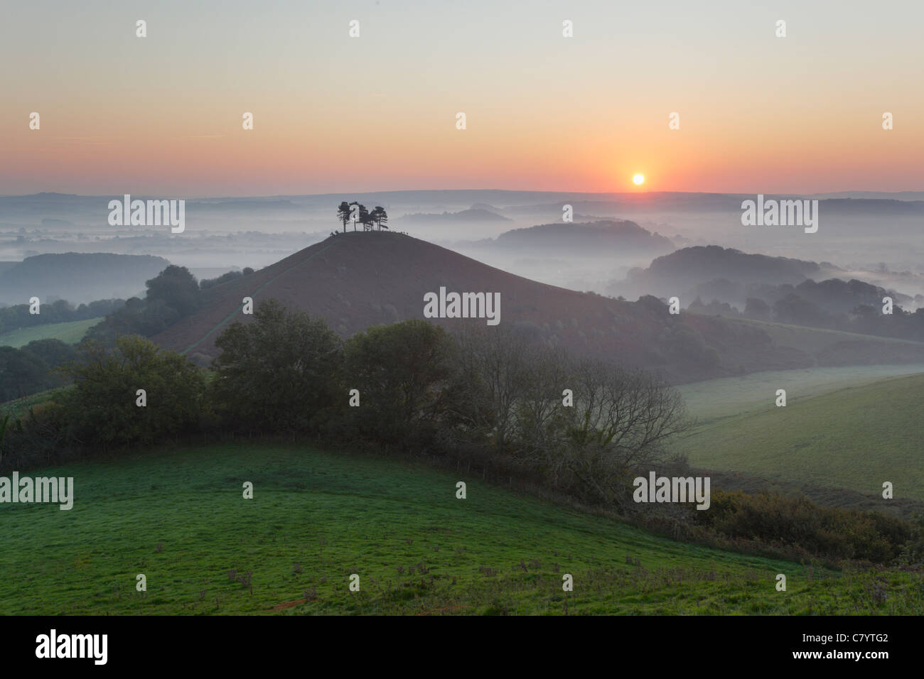 Die Colmer Hill und Marshwood Vale bei Sonnenaufgang. Dorset. England. VEREINIGTES KÖNIGREICH. Stockbild