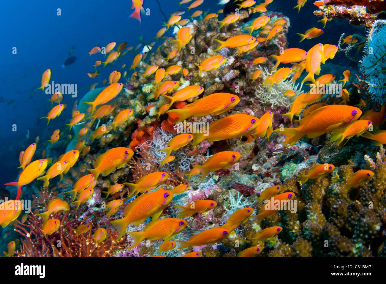 malediven unterwasser meerestiere und fisch schule der