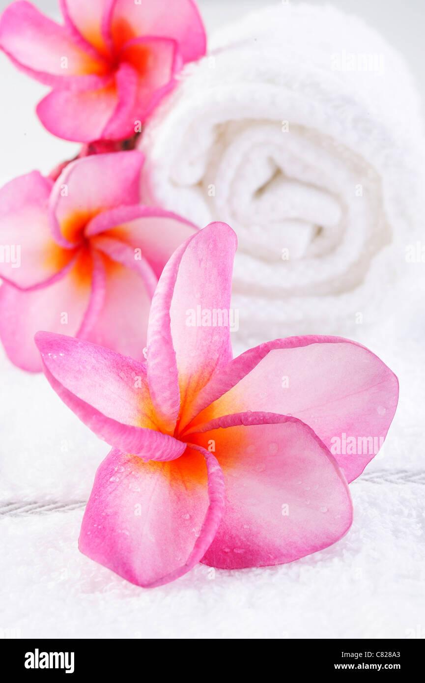 Massage-Handtuch mit Plumeria Blume Stockfoto
