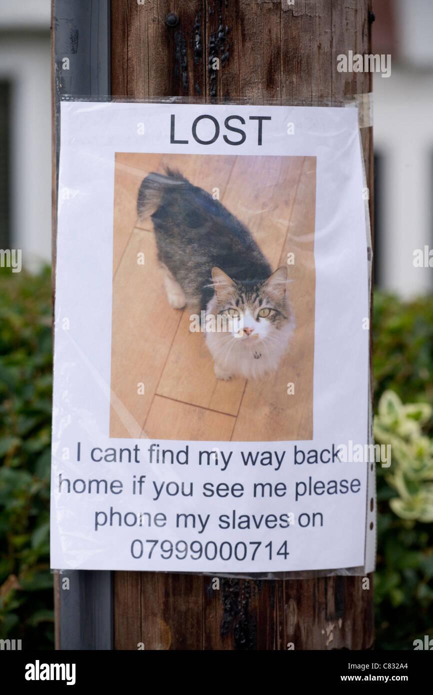 Verloren Haustier Poster Katze auf einem Lamp Post UK Stockbild