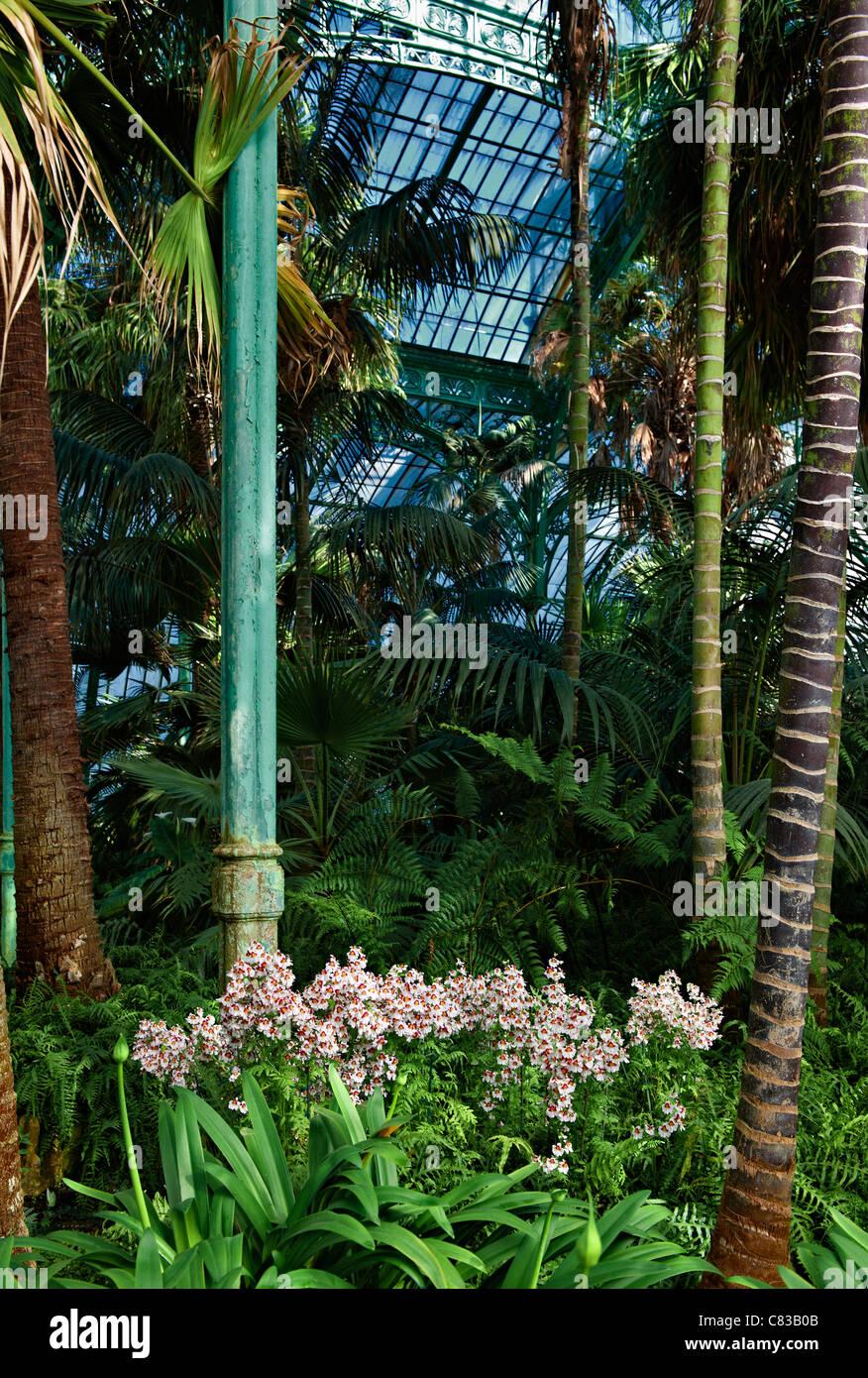 Orchideen, königlichen Gewächshäuser von Laeken, Königsschloss von Laeken, Brüssel, Belgien, Stockbild
